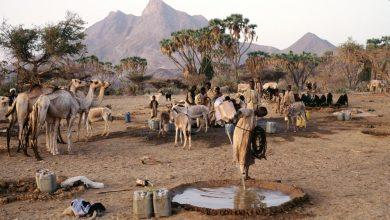 Photo of السودان: «البجا» تنفي بيان «الحكم الذاتي» والعلم الجديد وتتمسك بالاعتصامات